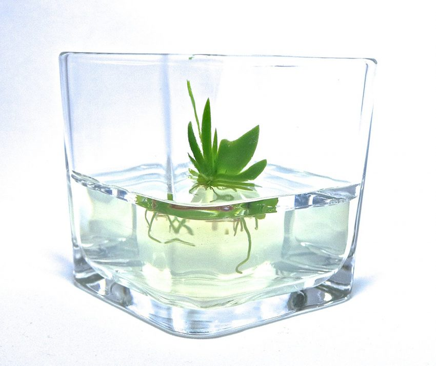 Zero Maintenance Orchid Bonsai