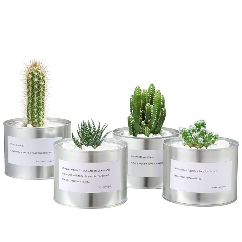 25 Office Desk Plants - Proverb Cacti