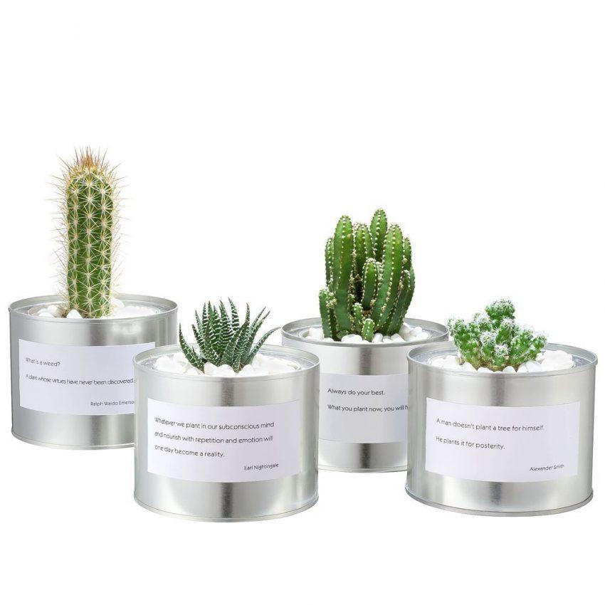 Proverb Cacti