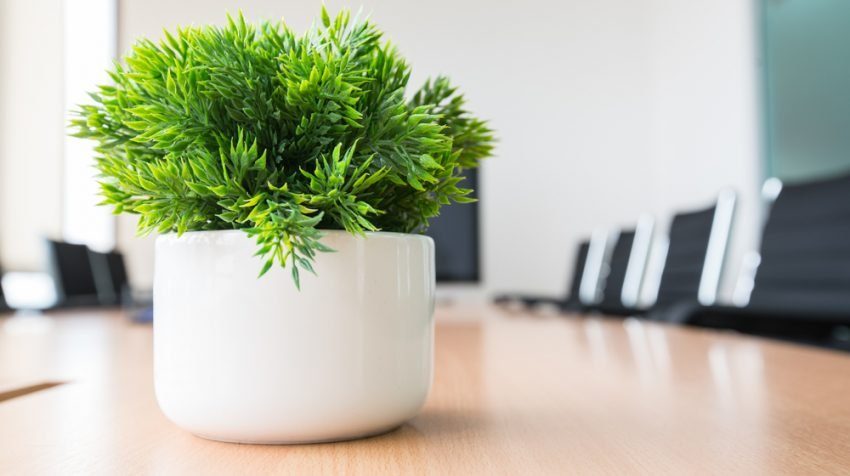 Want To Add Some Plants Your Office There Are Plenty Of Options Out Even If You Only Have A Small Amount Desk E Work With
