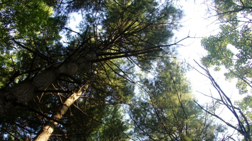 How to Optimize Your Website's Evergreen Content