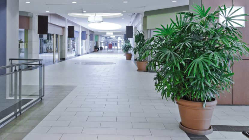 Shopping Center Anchor Trends
