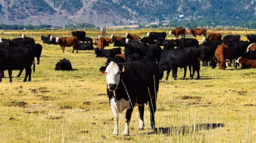 10 Things to Know Before Investing in a Cattle Ranch