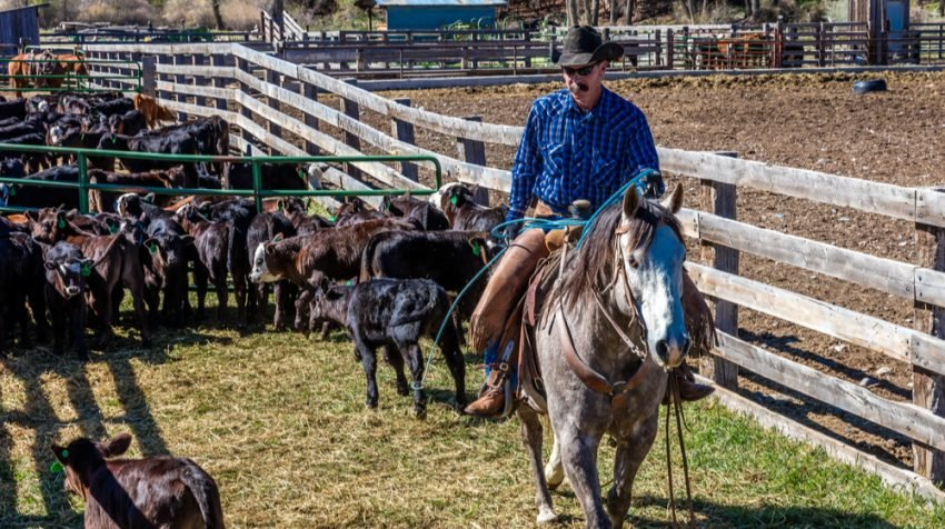 Five Challenges Faced by Cattle Ranchers Right Now