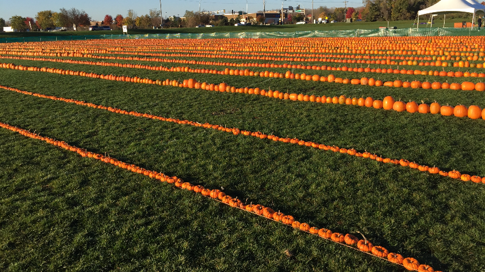 Small Business Guinness World Record Inspiration - Longest Line of Pumpkins