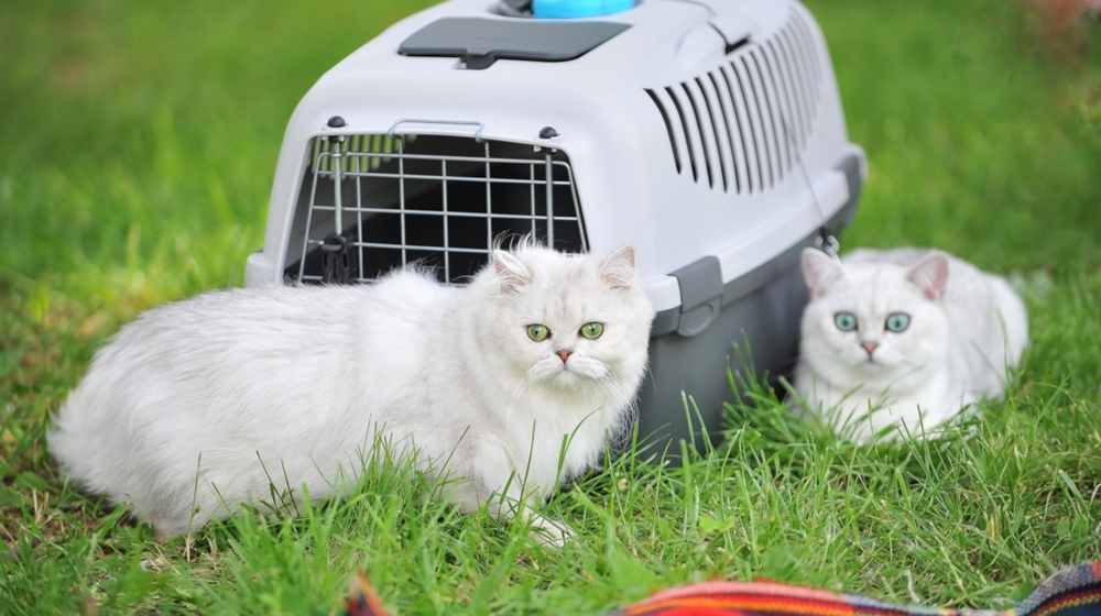 How to Start a Pet Sitting Business - Create a Pricing Structure