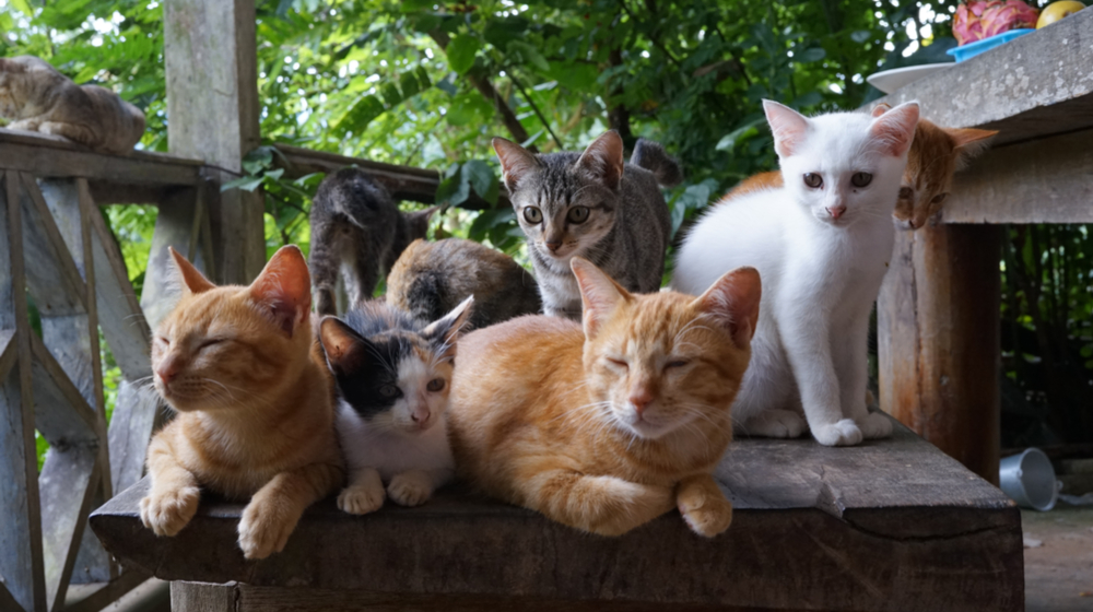 How to Start a Pet Sitting Business - Stay in Touch