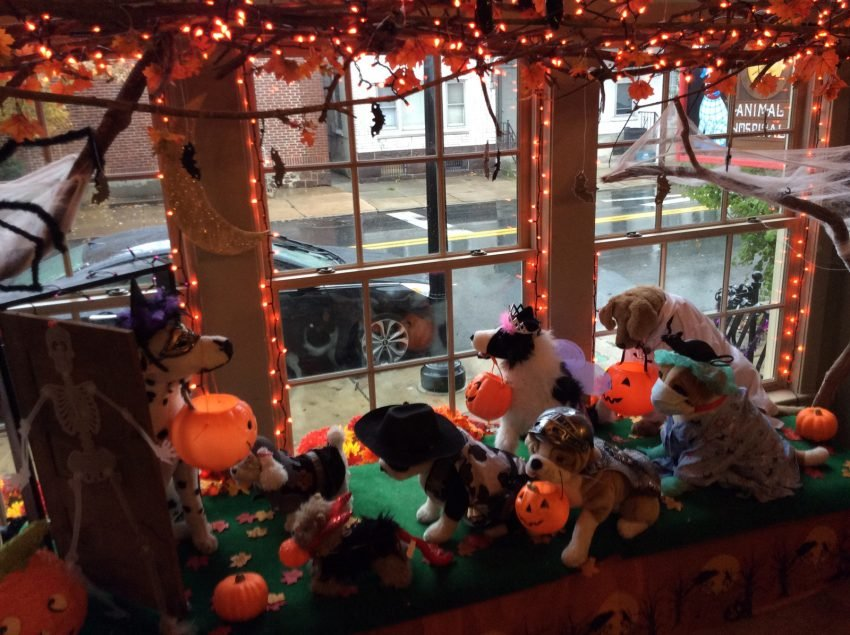 25 Examples of Halloween Retail Displays to Inspire You - Plush Animal Hospital Window - Halloween Retail Displays - Halloween Retail Ideas - Halloween Display Ideas