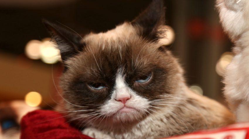 Grumpy Cat Lawsuit Wins $710,001 Against Small Beverage Business