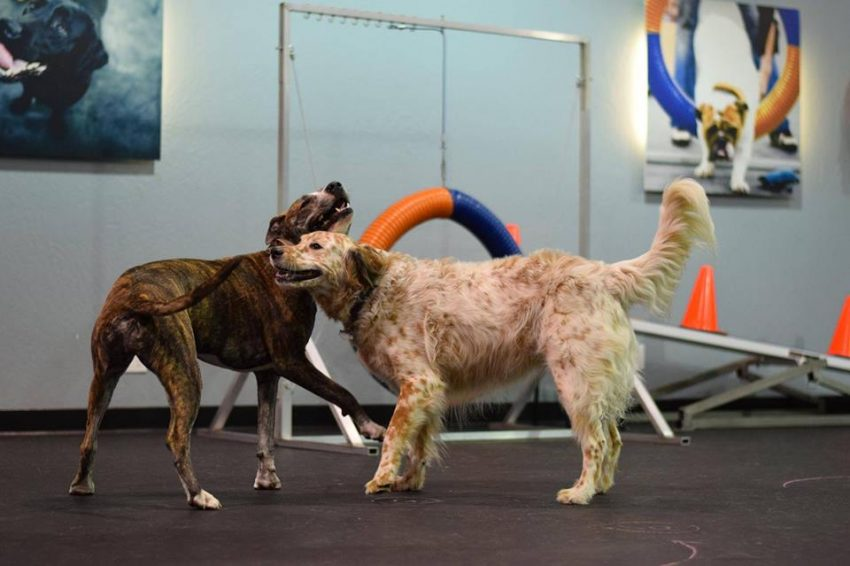 Spotlight: Dog Training Company Zoom Room Takes a Unique Approach to Dog Training