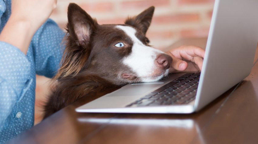 7 Take Your Dog to Work Day Tips