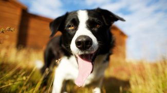 10 Tips for Social Media Marketing with Pets