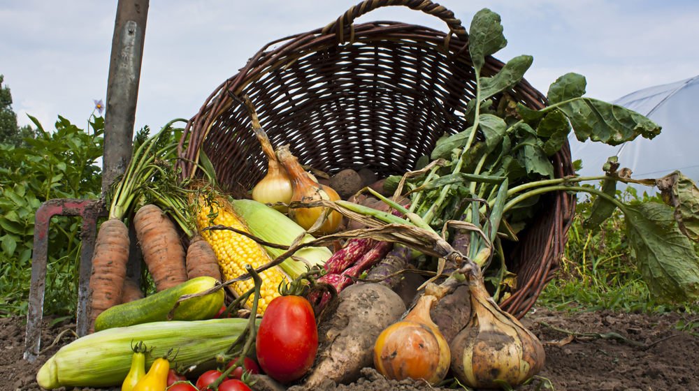 11 Reasons Why Local Organic Produce Is Good for Restaurants