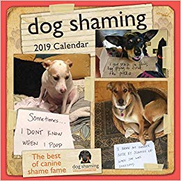 20 White Elephant Gift Ideas Your Staff Won't Want to Pass Up - Dog Shaming Calendar