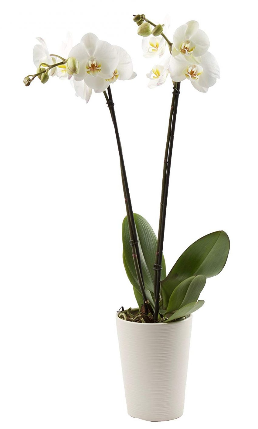20 Christmas Gifts for Coworkers - Orchids