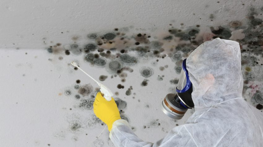 How to Handle Mold at Work: Top Tips to Prevent It from Destroying Your Business