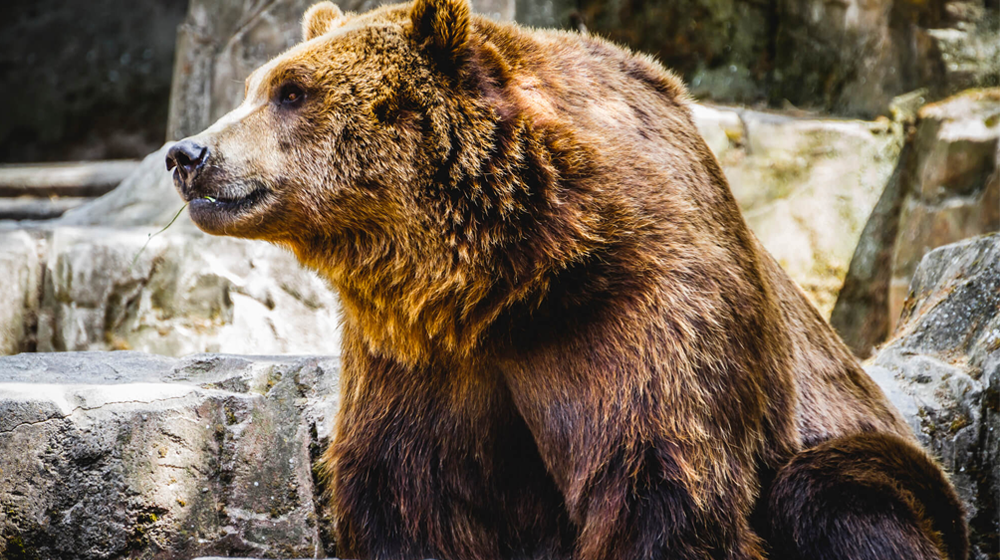 Can a Small Business Get a Loan in a Bear Market?