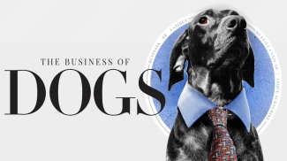 You Will Bark When You See the Potential in Dog Business Opportunities