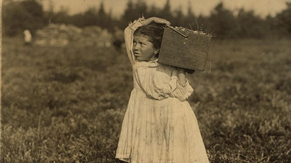 cranberry picker child labor