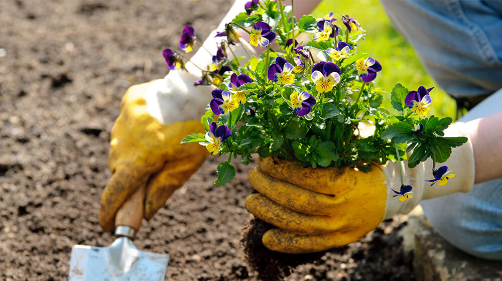 Why Managing Your Sales Leads is Like Gardening