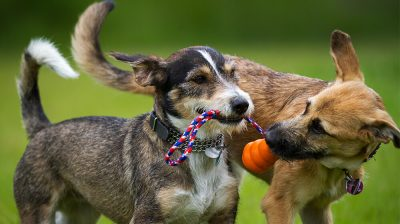 How to Start a Doggy Daycare