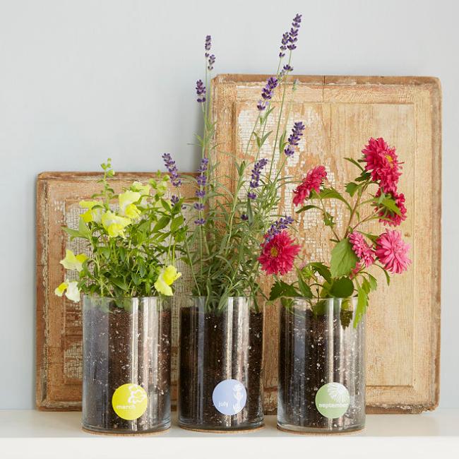 Birth Month Flower Kit