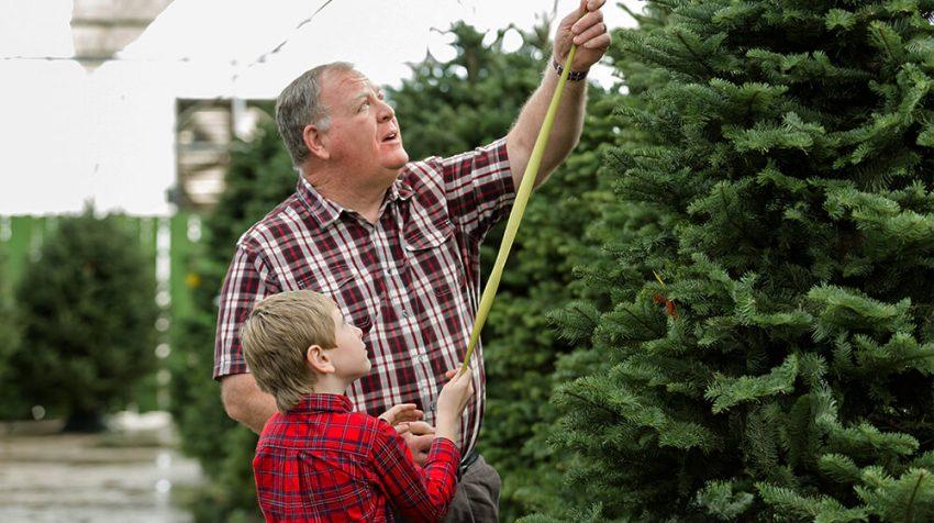 How to Start a Tree Farm