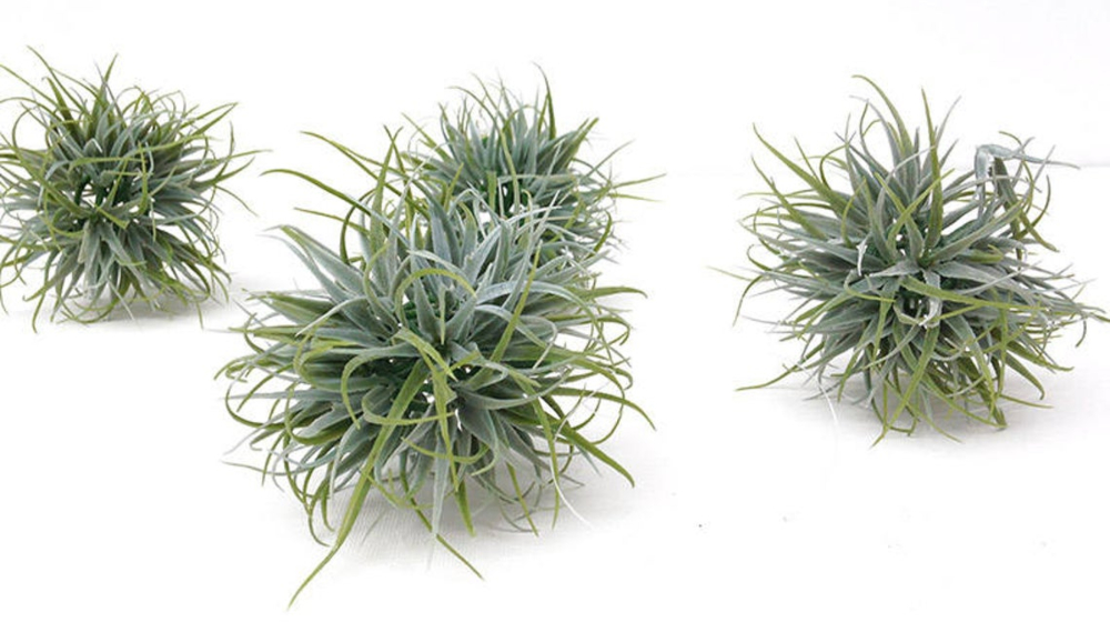 Air plant Orbs, Faux Tillandsia