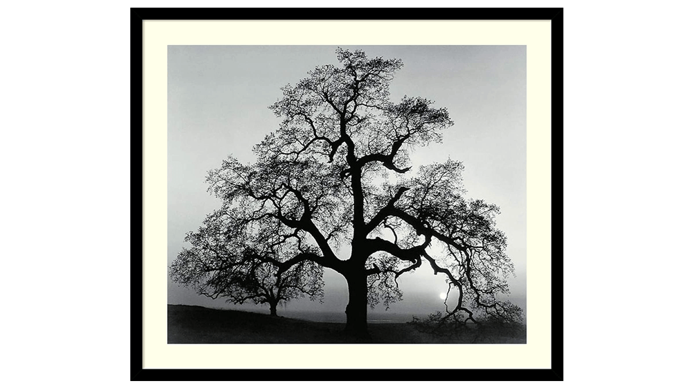 Framed Wall Art Print Oak Tree, Sunset City, California, 1962 by Ansel Adams