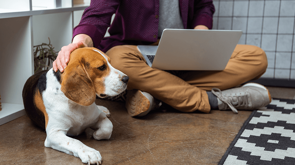 Dog-Breeds-for-Remote-Workers.png