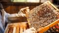 beekeeping.png