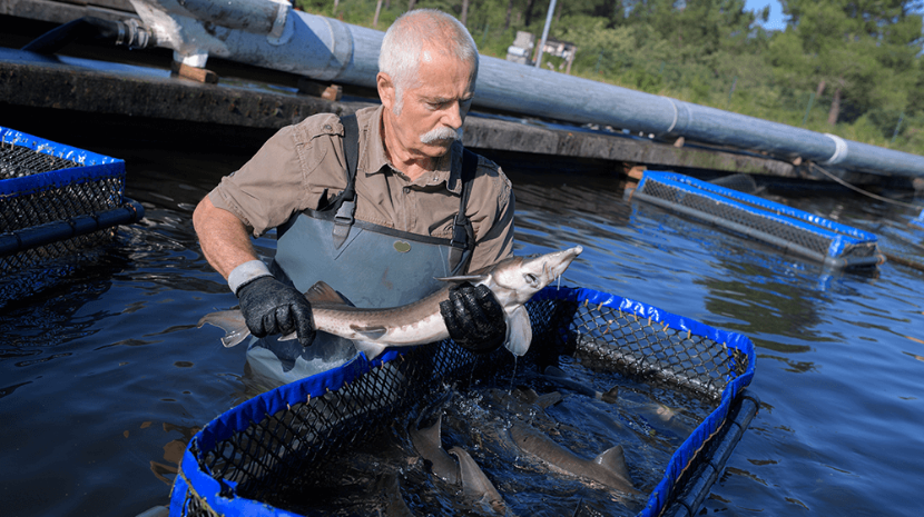 fish-farming-.png